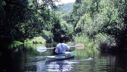 Paddle up the Knysna River...